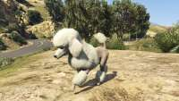 How to become a poodle in GTA 5.
