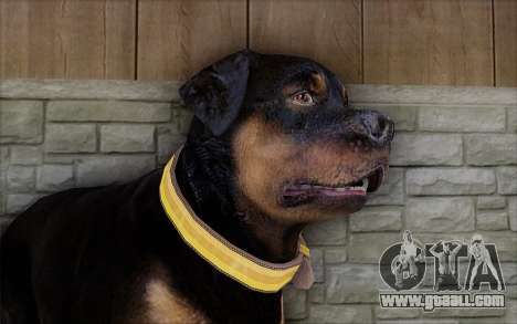 Rottweiler from GTA 5 for GTA San Andreas third screenshot