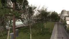A copy of the original trees